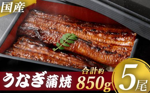 【送料込】九州産うなぎ蒲焼 ×5尾 <薩摩川内鰻>