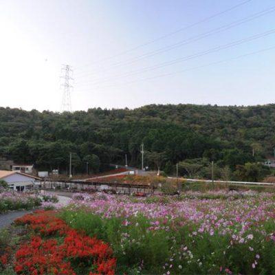 柳山アグリランド