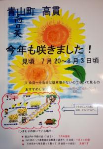 古い記事: 高貫自治会の向日葵畑