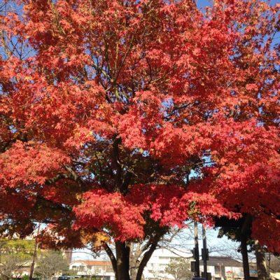 古い記事: 秋の深まり