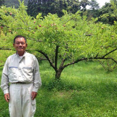 古い記事: 新企画『旬ビネ ストーリー』  引退後に始めた桃農園の挑戦!
