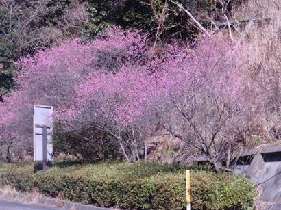 県道阿久根東郷線上(阿久根方面側)