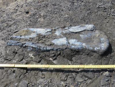 古い記事: 上甑島で恐竜の化石発見!!
