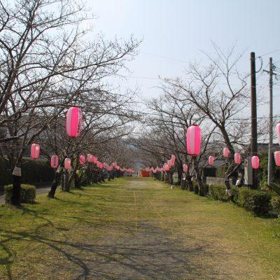 古い記事: 【桜情報】平成31年3月27日薩摩川内市桜開花情報