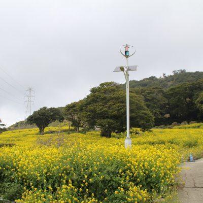 古い記事: 柳山アグリランドの菜の花が見頃です!!