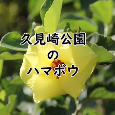 古い記事: 久見崎公園のハマボウ情報