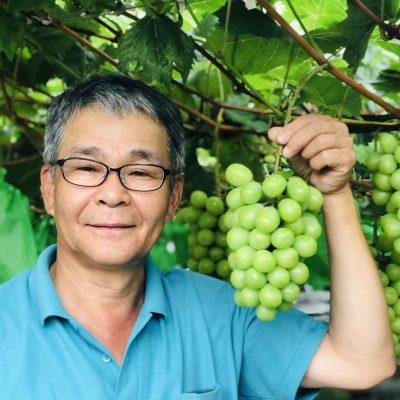 古い記事: 緑のかがやき。薩摩川内産シャインマスカット