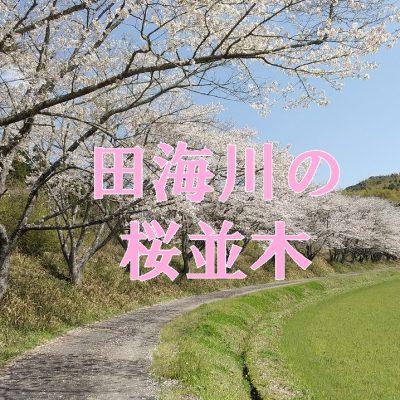 古い記事: 田海町田海川沿いの桜並木